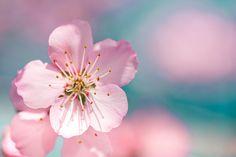 Spring Awaits by mylittlepixels, via Flickr