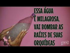USE ESSA ÁGUA NAS ORQUÍDEAS E NUNCA MAIS COMPRE ENRAÍZADOR PARA ELAS...!!! - YouTube