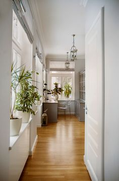 indoor planting idea traditional home office chair table windows storage space light colored walls door plants of Wonderful Indoor Planting Idea Choices to Choose From