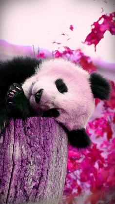 ADORABLE PINK PANDA