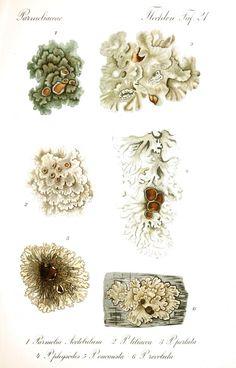 Botanical Drawings, Botanical Art, Charcole Drawings, Flora, Forest Illustration, Nature Journal, Art Graphique, Natural Texture, Vintage Prints