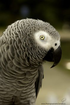 Parrot by Cornell Gill        on 500px