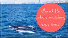 Incredible Whale watching experience!   Gold Coast Vlog
