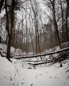 Snowflakes dance in silence and the forest is so pale and peacefull today. Have a magical Sunday!❄ Płatki śniegu tańczą w ciszy, las jest dziś taki spokojny.Odpoczywa.Pięknej Niedzieli!❄💙❄ * #woodland #livesimple #wildnature #naturelover #fairytail #wintermood #january #nature #landscape #inthewoods #naturewalk #forestdesign_pl #winter #zima #styczeń #walk #las #walkinnature #forestlife #forestsoul #forestwalk #wanderlust #wanderer #wildnature #intothewild #wildnature #snow #drzewa #trees