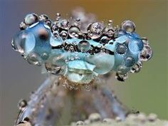 This picture of an insect covered in dew moments after a downpour is part of Ondrej Pakan's series of big-eye views from around the world