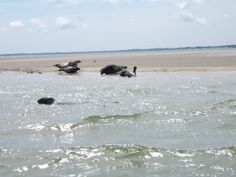Seals having a whale of a time in the sun at Wexford Harbour. Pic by George Lett