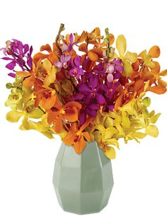 Exotic Orchid Trio Starting at $69.95 #orchids #summerflowers #giftideas