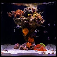 Aquascaping ideas and plans