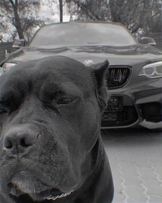 Black Cat Aesthetic, Badass Aesthetic, Thug Style, Scary Dogs, Bmw Girl, Corso Dog, Stunt Bike, Bmw Wallpapers, Top Luxury Cars