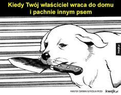 #kwejk #pies #humor