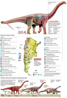 Comparing giant dinosaurs found in Argentina