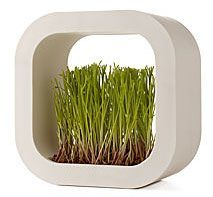 PRAIRIE FACTORY SQUARE a charming frame planter. This small white plastic square allows you to plant & grow prairie grass seeds along the bottom. Place it on a shelf, in front of a window, stack a few to create a plant-like sculpture, or hang on the wall. Each frame comes with a packet of prairie seeds, water keeper pellets, & frame. All you need to add is water.