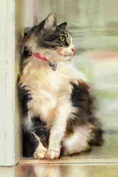 Dianne Woods paints realistic cats in real life and art using windows, doors, and mirrors. She loves to paint longhaired cats as in this beauty. Watercolor Cat, Watercolor Animals, Cool Cats, Photo Chat, Beautiful Cats, Beautiful Images, Domestic Cat, Cat Drawing, Animal Paintings