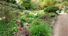 Hillier Gardens, Bog Garden