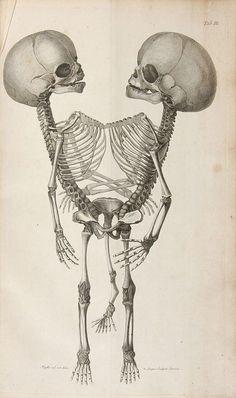 Observationes_Anatomicae.jpg (816×1378)