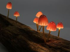 These Led Powered Mushroom Lamps Allow You To Bring A Corner Of A Magical Forest Right To Your Desk Theyre Lovingly Handmade From Glass And Found Wood By