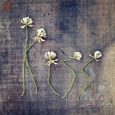 Abstract Fine Art Photograph, Clover Wildflowers, Spell Kiss, Square 8x8 Print--Good Idea to dry/press flowers in letter shapes, then when dry, spell what you want and frame it!