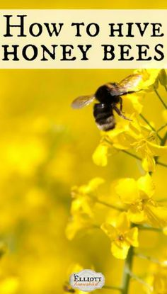 elliott homestead beekeeping 101 hiving bees and homemade sugar syrup