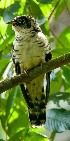 # bird #