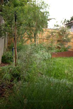 Native garden by Mallee Design