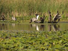 Danube Delta Romania Black Sea Delta Dunarii