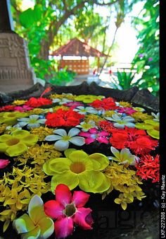 Colourful flowers floating in a water basin, Air Sanih, Northern Bali, Indonesia, Asia