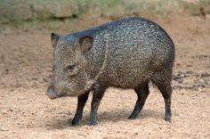 Animais em risco de extinção do Rio Grande do Sul