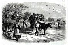 CHARLESTON, South Carolina, BLACKS Bring Produce to MARKET, antique print  1877 #antique
