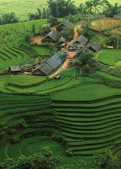 Terrace agriculture in Vietnam