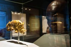 Culture war brews over loan of South African 700 year old golden rhino figurine