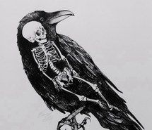 Inspiring image anatomy, bird, black and white, death, drawing, illustration, skeleton, skull #1207965 by awesomeguy - Resolution 640x926px - Find the image to your taste