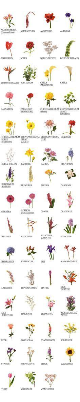//flower glossary #floral #arrangement