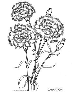 coloring page flower carnation projects to try pinterest