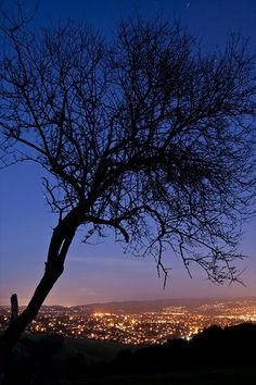 Tree Silhouette Over Castro Valley 7907 Castro Valley California, Hayward California, California California, Trees Beautiful, Beautiful Sites, East Bay Area, San Leandro, Tree Silhouette, Nature Tree