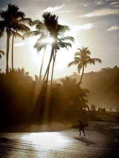 beach sunsets, heaven, dream, wave, trees, sea, light, palms, puerto vallarta