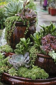Succulent stacked container garden