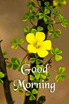 Good Morning Images For Whatsapp Good Morning Monday Images, Good Morning Friends Images, Good Morning Beautiful Pictures, Good Morning Nature, Good Morning Happy Sunday, Good Morning Roses, Good Morning Images Flowers, Good Morning Cards, Good Morning Photos