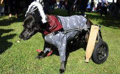 119 Best Dog Halloween Costumes images | Dog halloween