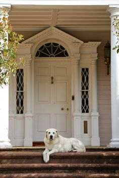 Southern icon:  white lab lounging on the front porch,awaiting visitors.  #Charleston Daily Photo