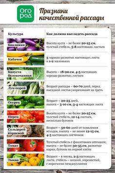 Признаки качественной рассады овощей