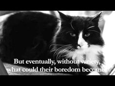 "▶ Henri - ""On Cat Food Boredom"", Part 4 of 4 - YouTube"