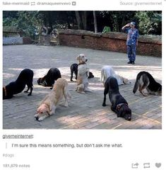 48 Times Tumblr Was Funny About Animals Why's the man in the back saluting???