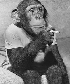 cigarette break for the chimp