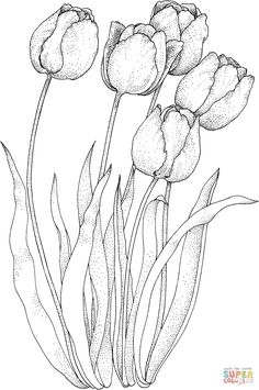 Four Tulips coloring page | SuperColoring.com