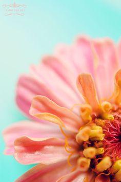 estos colores son los q me gustan para la boda... que te parecen? para todo.... invitas, postres, en fin!
