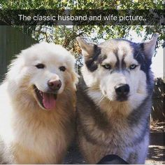 23 Funny Animal Pictures - Funny Animals - Daily LOL Pics Dogs say or think the darndest things. Here are some possible thoughts your dog may have. Funny Animal Memes, Cute Funny Animals, Funny Animal Pictures, Dog Pictures, Funny Cute, Funny Dogs, Funny Memes, Animal Pics, Funny Puppies