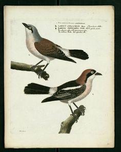 bird engraving
