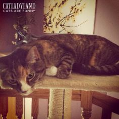 Catladyland: Cats are Funny: Another Day in the World of Cat-Photo-Taking