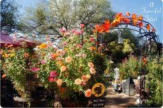Fall Flower Garden