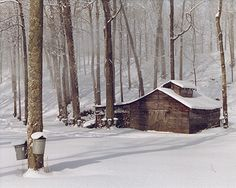 A sugar house in the woods of Mendon, VT. That's for tapping maple trees and turning their sap into syrup.